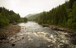 Flodström i skogen Arkivfoto