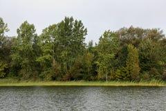 Flodstrand med gräs och träd arkivbilder