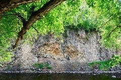 Flodstranden för tigertexturpalissader Arkivfoto