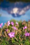 Flodstrandpelargon med ettkorkat berg reflekterade i Arkivbild