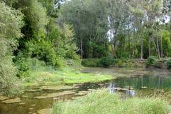 Flodstrandskog Arkivfoto