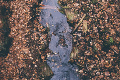 Flodstule Arkivfoto