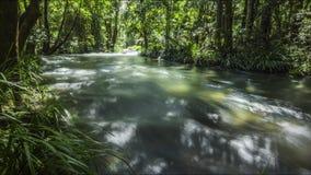 Flodtimelapse i frodig skog arkivfilmer