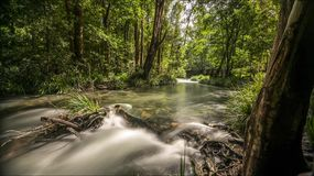 Flodtimelapse i frodig skog med vattenfallet lager videofilmer