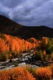 flodträ för 2 höst Arkivfoto