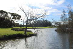 Flodträdet Royaltyfria Foton