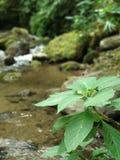 Flodväxt, natur arkivbilder