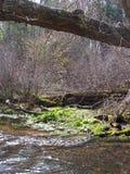 Flodväxter Royaltyfria Foton
