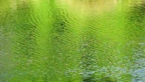 Flodvatten stock video