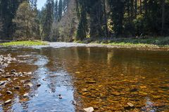 Flodwutach med träden som reflekterar i det grunda vattnet i den svarta skogen i Tyskland arkivbild