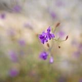 Floewr in blur Stock Photos