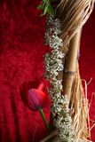 Floewrs in studio. Tulip with raffia supported by a bamboo cane Stock Photo