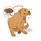 Floh geplagter Hund Verkratzen Sie die Floh-Wanzen Vektorillustration auf einem weißen Hintergrund Floh hört das Leben ab Stockfotografie