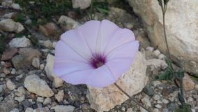 Flom rif är din foto tillfogar Arkivfoton