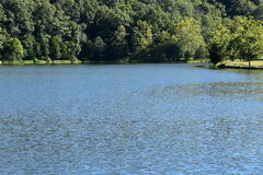 flont的密集的森林向蓝色湖在夏天 免版税库存照片