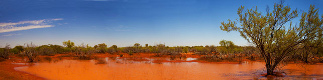 After the flood. Panoramic taken on the way to Monkey Mia, after the flood of Murchison river royalty free stock images