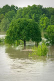 During the flood. Lonely tree during the flood Stock Image