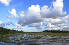 Flood. On the field with cloudy sky view. Rusne village, Lithuania stock photo