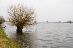 Flood. On the river Oder in Germany stock photography