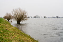 Flood. On the river Oder in Germany royalty free stock photo