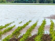 Flood 2013 Stock Photo