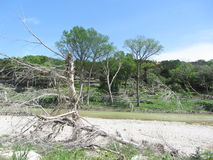 Flood damage Whimberly Texas. Photo shows the damaged trees and how much water came through there during the Blanco river flood of 2015 that swept away a whole royalty free stock photos