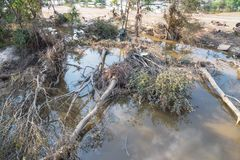 Flood debris. Many uprooted trees and pile of debris on dangerous part of landslip river/stream section after flooding by heavy rains of Harvey hurricane storm Royalty Free Stock Image