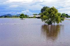 Flood Farm in Thailand Stock Photography