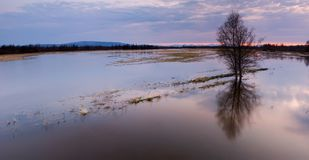 Flood the field. Panorama flood the field with a tree at sunset Royalty Free Stock Image