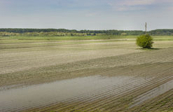Flood in field Royalty Free Stock Image