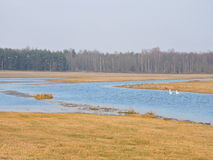 Flood in fields. Lithuanian spring landscape Royalty Free Stock Photos