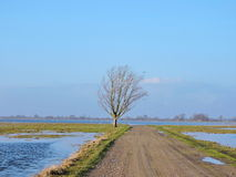 Flood in fields and road Royalty Free Stock Photo