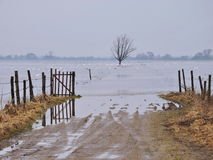 Flood fields and swans, Lithuania Stock Photo