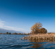 Flood. Flooded corn field in Slovenia. Royalty Free Stock Photography