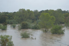 Flood. SAN ANTONIO, TX - OCTOBER 24, 2015: Leon Creek is full of flood water due to excess rain from Hurricane Patricia on October 24, 2015 in San Antonio, Texas Stock Images