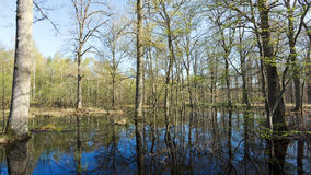 Flood in Fontainebleau forest Royalty Free Stock Photo
