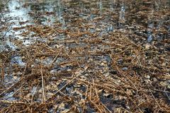 During the flood. Last year`s dried fern during the flood covered the surface of the risen water royalty free stock photos