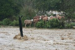 Flooded fields after heavy storm in rural Mallorca. Flood in Mallorca fields near the village of Bunyola during a hevy fall storm in the Spanish Balearic island royalty free stock image