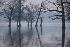 Flood in Nature park Lonjsko polje, Croatia Stock Image
