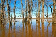 Flood in oak wood Stock Photos