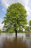 Flood On The River Warta 2010 Royalty Free Stock Photography
