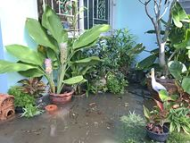 Flood over the garden beside the house. Flood over the garden beside the blue house in rainy season of Thailand royalty free stock photography