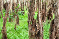 Flood-plain forest Royalty Free Stock Photography