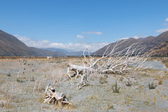 Flood plain of Rangitata River in the middle of summer Stock Image