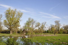 Flood plain with trees. Spring. Flood plain with trees at the Dnieper river stock photography