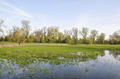 Flood plain with trees. Ukraine. Spring. Flood plain with trees and flood water at the Dnieper river stock image