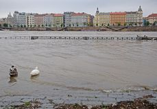 Flood in Prague. Flood on the river Vltava in Prague, Czech republic royalty free stock photos