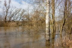 Flood on the river in spring during high water royalty free stock photography