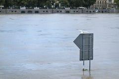Flood river Vltava Prague Czech republic june 2013 Royalty Free Stock Photos