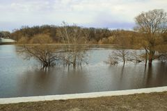 Flood in spring. flooded trees royalty free stock photography